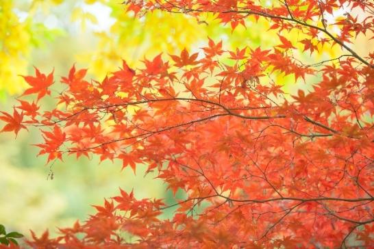 箱根の紅葉の時期見頃
