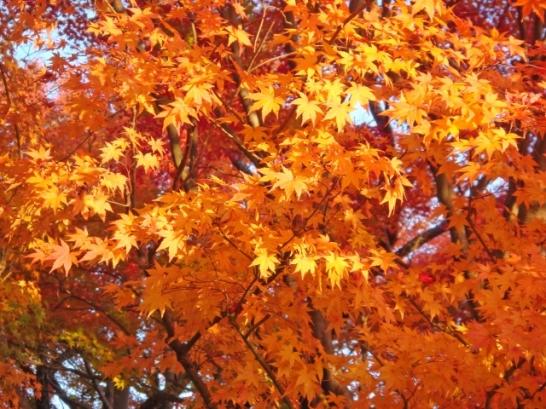 六義園紅葉見頃東京