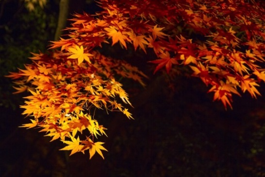 東京でライトアップされた紅葉スポットをご紹介!