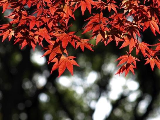 東京紅葉見ごろ