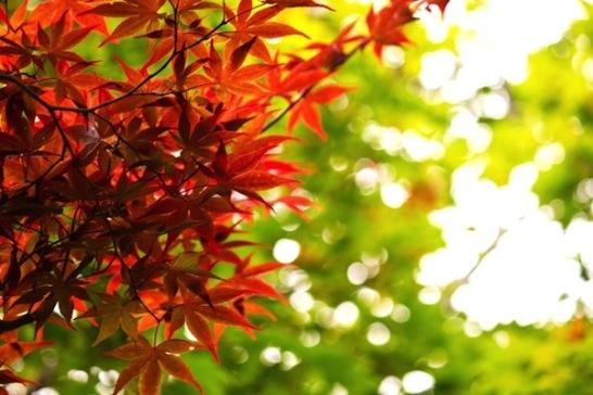 東京紅葉見ごろ02
