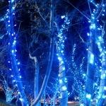 大阪の中之島イルミネーションで光の幻想世界へ2016