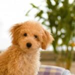 蚊取り線香は猫、犬に害はある?(ペット用と人間用)